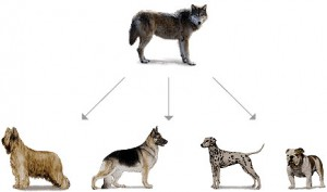 Dogs had a common ancestor - a dog