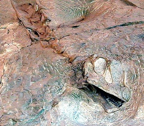dinosaurbone