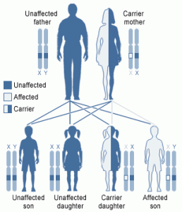 Creation: Mutation Chart (Human being)