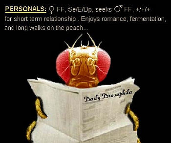 Creation: Fruit Fly Personal Ad