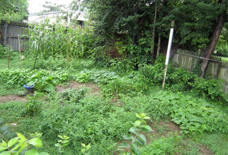 The Garden – Week 10