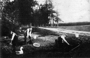 Creation: Piltdown Excavation I