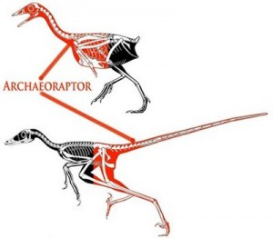 Creation: Archaeoraptor 02
