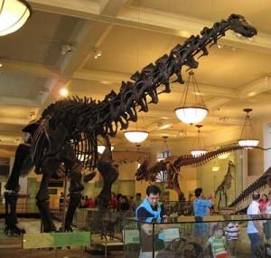 Creation: Brontosaurus Skeleton (Smithsonian)