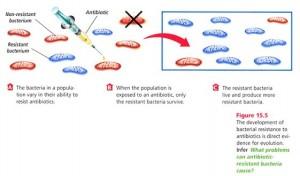 Drug resistant bacteria in textbooks