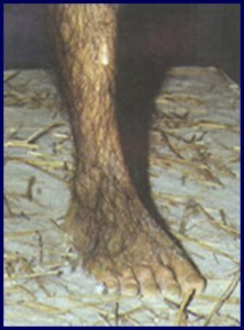 Creation: Lucy -- a foot long evolutionary fraud