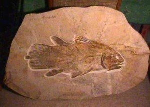 Creation: coelacanth fossil