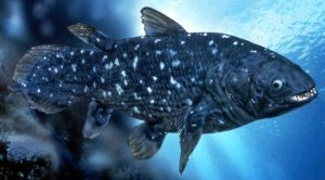 Creation: coelacanth living today