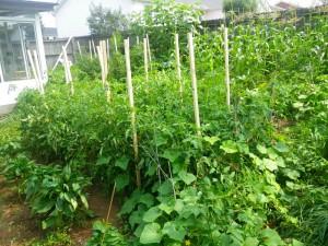 0719 whole garden