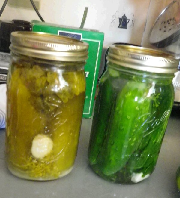 Cold Packed Cucumber Dill Pickles