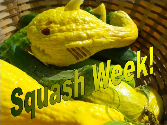 Welcome to Squash Week 2012!