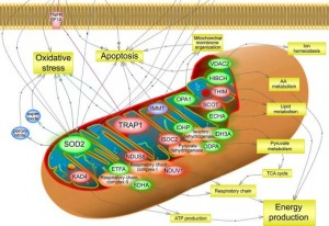 Biochemical Pathways 01