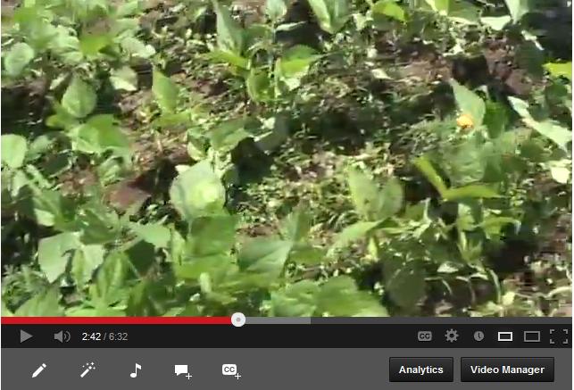 Garden Update Video Blog Week 8